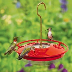 Ruby throated Hummingbirds-on-the-WBu-High-Perch Hummingbird Feeder