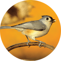 Tufted Titmouse, bird photo, Wild Birds Unlimited, WBU