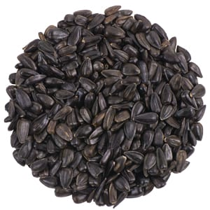 Premium Black Oil Sunflower, Bird Food, Wild Birds Unlimited, WBU
