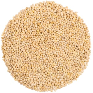 White Millet, Straight Seed, Bird Food, Wild Birds Unlimited, WBU