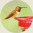 Hummingbird, Wild Birds Unlimited, WBU