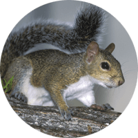 Squirrel, animal photo, Wild Birds Unlimited, WBU