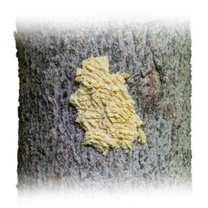 Bark Butter on a Tree Trunk, Wild Birds Unlimited, WBU