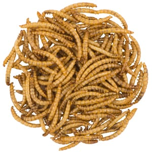 Mealworms, Bird Food, Wild Birds Unlimited, WBU
