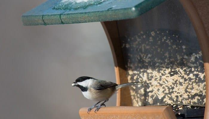 Deluxe Blends, Bird Food, Wild Birds Unlimited, WBU
