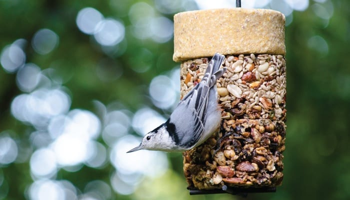 Flying Start Combo, Bird Food, Wild Birds Unlimited, WBU