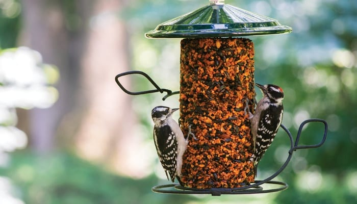 Hot Pepper Seed Cylinder, Bird Food, Wild Birds Unlimited, WBU
