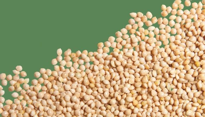 Straight Seeds While Millet, Bird Food, Wild Birds Unlimited, WBU