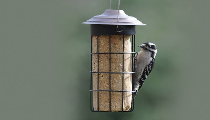 Nuts & Berries No-Melt Suet Cylinder, Bird Food, Wild Birds Unlimited, WBU