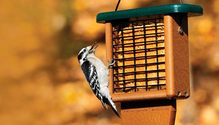 Hot Pepper Suet, Bird Food, Wild Birds Unlimited, WBU