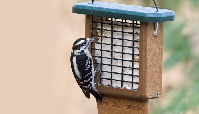 Suet Naturally Nuts, Bird Food, Wild Birds Unlimited, WBU