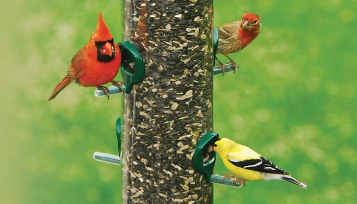 Supreme Blend, Bird Food, Wild Birds Unlimited, WBU
