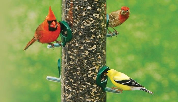 Supreme Blend, Bird Food, Wild Birds Unlimited, WBU