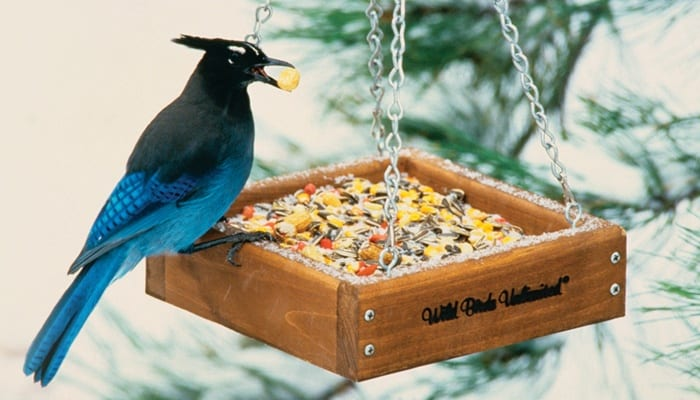 Wildlife Blend, Bird Food, Wild Birds Unlimited, WBU