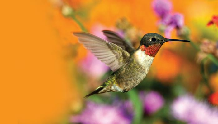 Hummingbirds on Flower Coloring Pages