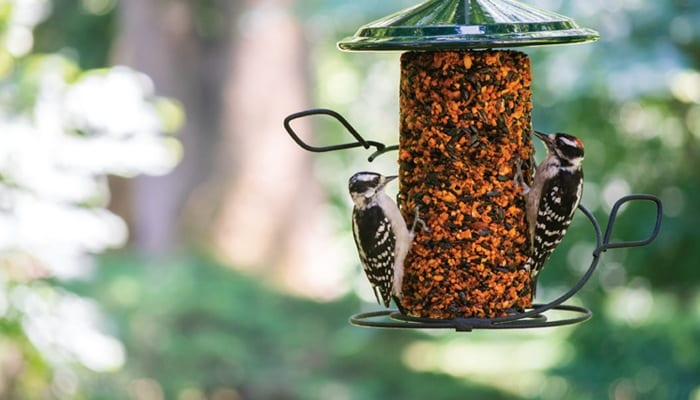 Downy Woodpecker, Bird Photo, Wild Birds Unlimited, WBU