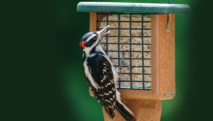 Hairy Woodpecker, Bird Photo, Wild Birds Unlimited, WBU
