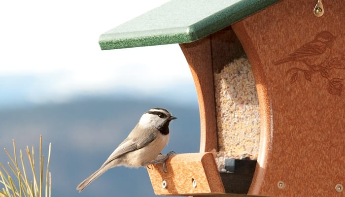 EcoTough Classic Too Hopper Feeder, Bird Feeder, Wild Birds Unlimited, WBU