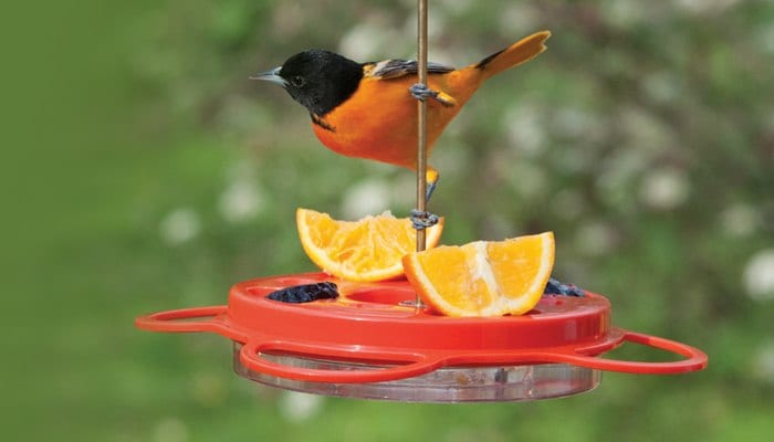 Oriole Feeder 12 oz, Bird Feeder, Wild Birds Unlimited, WBU