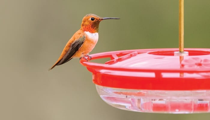 Small High Perch Hummingbird Feeder, Bird Feeder, Wild Birds Unlimited, WBU