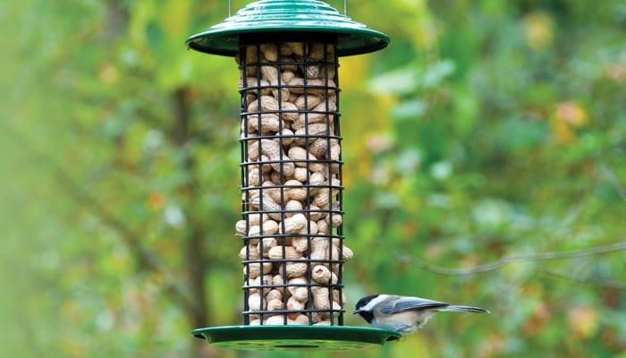 Peanut Feeders - Wild Birds Unlimited | Wild Birds Unlimited
