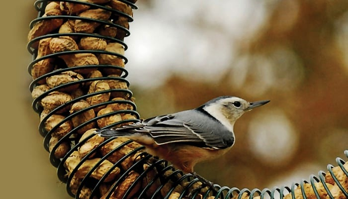 Peanut Wreath, Bird Feeder, Wild Birds Unlimited, WBU