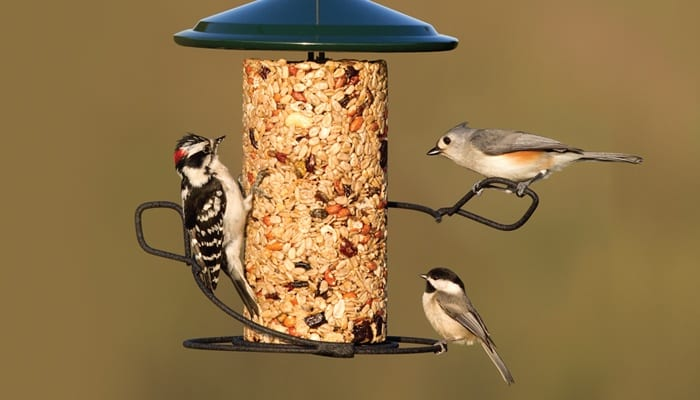 Seed Cylinder Feeder, Bird Feeder, Wild Birds Unlimited, WBU