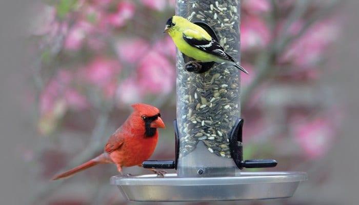 Medium EcoClean Seed Tube, Bird Feeder, Wild Birds Unlimited, WBU