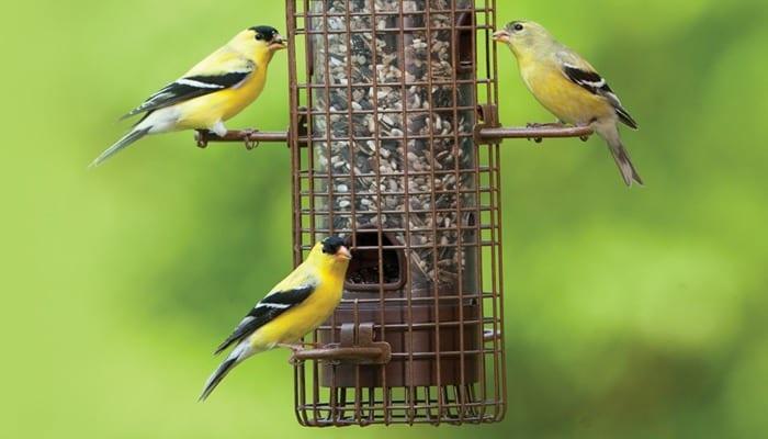 Fundamentals, Squirrel-Proof Bird Feeder, Wild Birds Unlimited, WBU