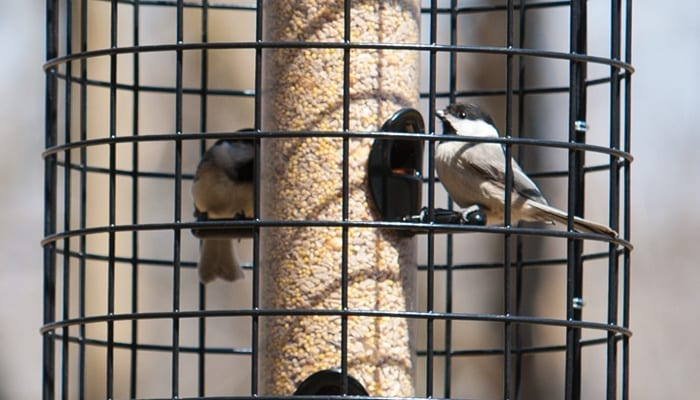 On Guard Cage, Squirrel-Proof Bird Feeder, Wild Birds Unlimited, WBU