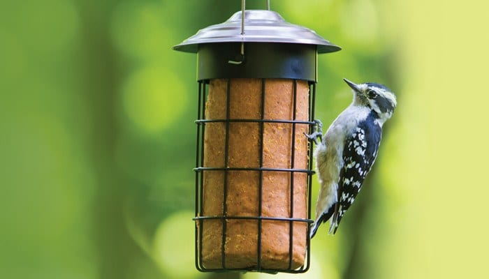 Suet Cylinder Bird Feeder, Wild Birds Unlimited, WBU