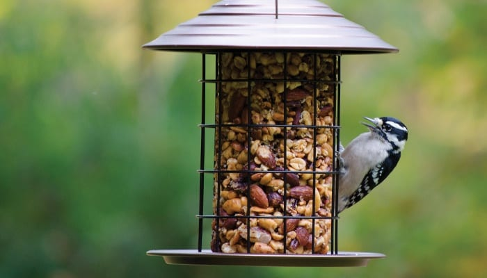 Tidy Cylinder Feeder, Bird Feeder, Wild Birds Unlimited, WBU