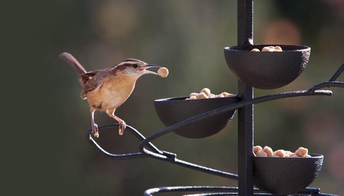 Spiral Treat Tray, Bird Feeder, Wild Birds Unlimited, WBU