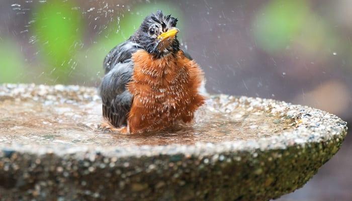 Bird Bath, Water, Wild Birds Unlimited, WBU