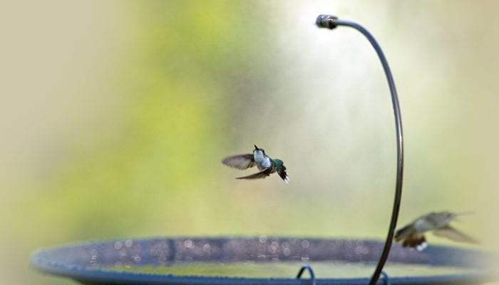 Drip-or-Mist, Bird Bath, Water, Wild Birds Unlimited, WBU