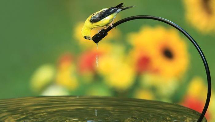 Drip-or-Mist, Bird Bath, Water, Wild Birds Unlimited, WBU