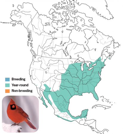 Nothern Cardinal Range Map, Wild Birds Unlimited, WBU