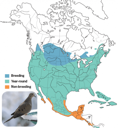 Mourning Dove Range Map, Wild Birds Unlimited, WBU
