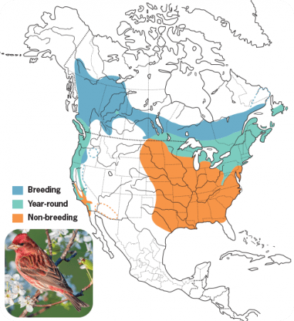 Purple Finch Range Map, Wild Birds Unlimited, WBU