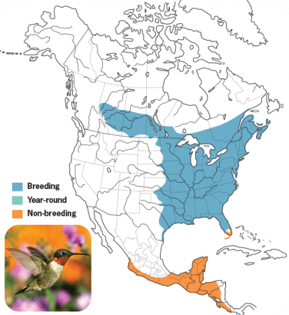 Ruby-throated Hummingbird Range Map, Wild Birds Unlimited, WBU
