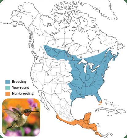 Ruby-throated Hummingbird Range Map, Wild Birds Unlimited, WBU