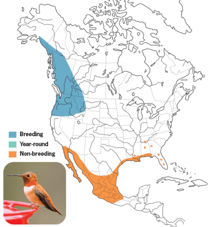 Rufous Hummingbird Range Map, Wild Birds Unlimited, WBU