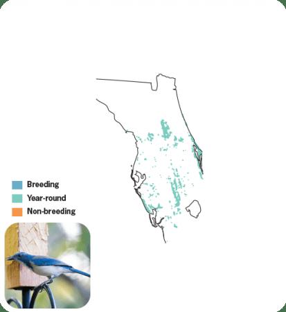 Florida Scrub-jay Range Map, Wild Birds Unlimited, WBU