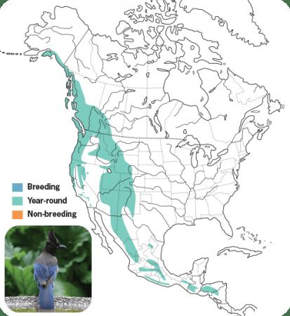 Steller's Jay Range Map, Wild Birds Unlimited, WBU