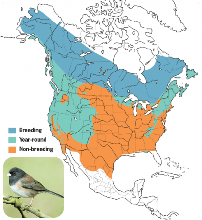 Dark-eyed Junco Range Map, Wild Birds Unlimited, WBU