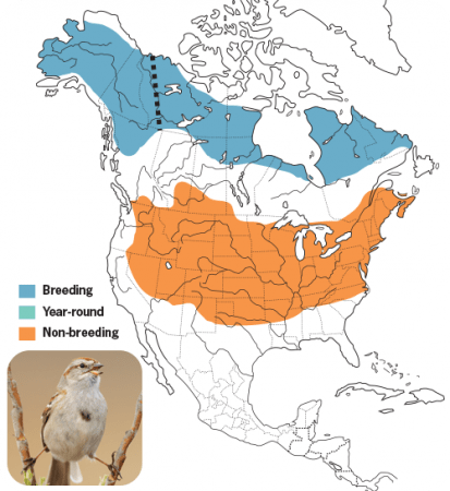 American-tree Sparrow Range Map, Wild Birds Unlimited, WBU
