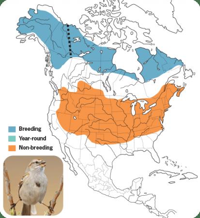 American-tree Sparrow Range Map, Wild Birds Unlimited, WBU