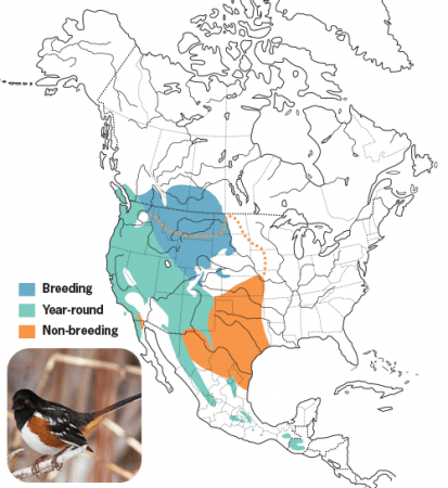 Spotted Towhee Range Map, Wild Birds Unlimited, WBU