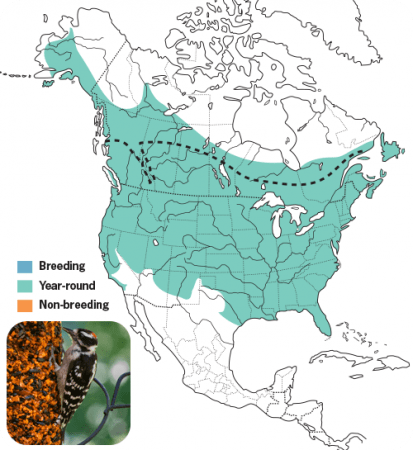 Downy Woodpecker Range Map, Wild Birds Unlimited, WBU