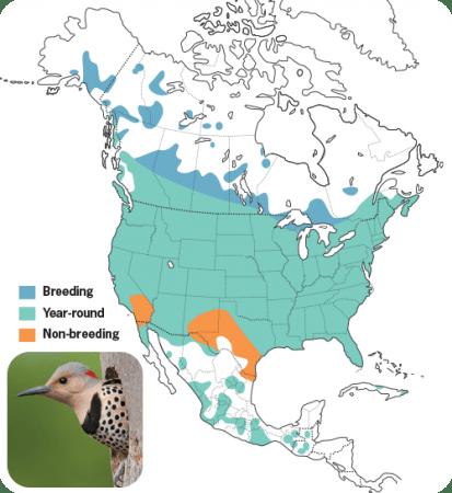 Northern Flicker Range Map, Wild Birds Unlimited, WBU
